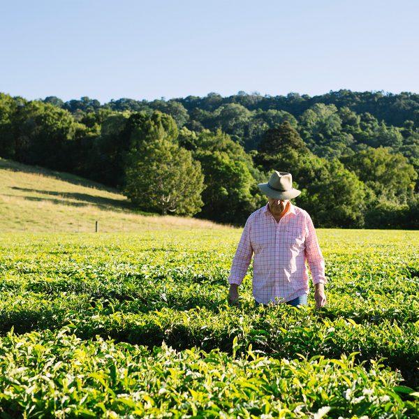 Madura Tea: Brewing Australia's Favourite Tea Since 1978